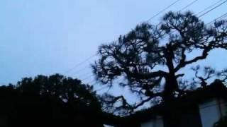 伝書鳩 - 夕暮れ