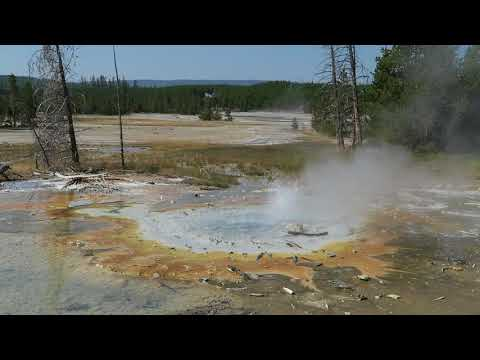 Minute Geyser, Yellowstone