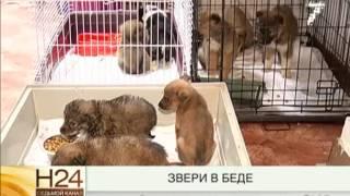 Животных спасли из приюта