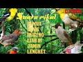 Kombinasi Suara Burung Untuk Pikat Di Jamin Lengket  Mp3 - Mp4 Download