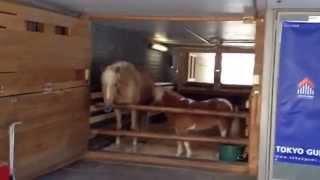 Random horse stable in Tokyo Japan.
