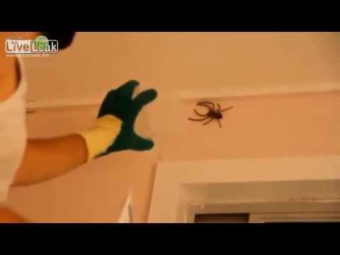 Как поймать насекомое или паука в доме
