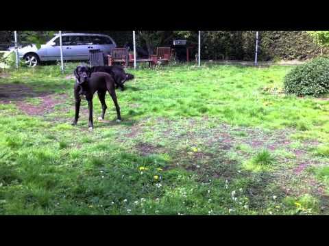 hondenhotel,hondenpension,vip dog park