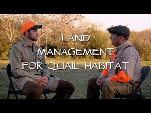 Land Management For Quail Hunting - With Dan Hinkle In South Texas