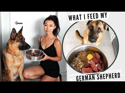 What I Feed My German Shepherd (Grain-Free, Raw & Hip Dysplasia)