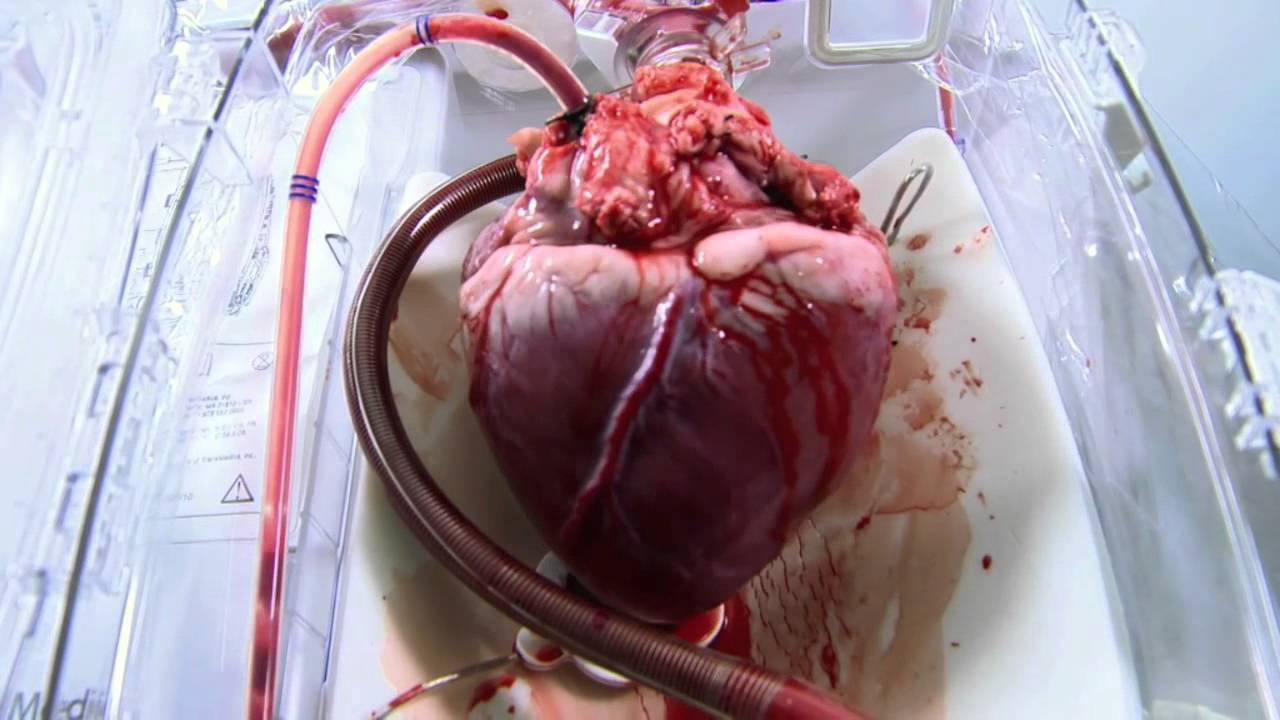 real human heart beating - photo #26