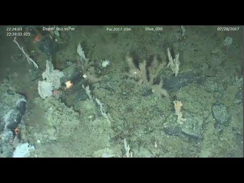 Exploring huge undersea mountains off B.C. coast
