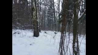 polowanie na dziki (opolskie)