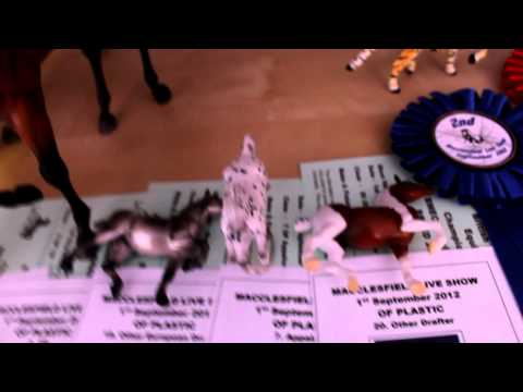 Macclesfield Model Horse Live Show Placeings! Breyer Model Horses!