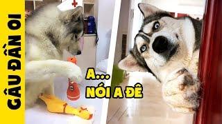 【Tik Tok Chó Mèo】50 Sắc thái biểu cảm của Đại ngáo Husky khi bị troll 😂 | Gâu đần husky #1