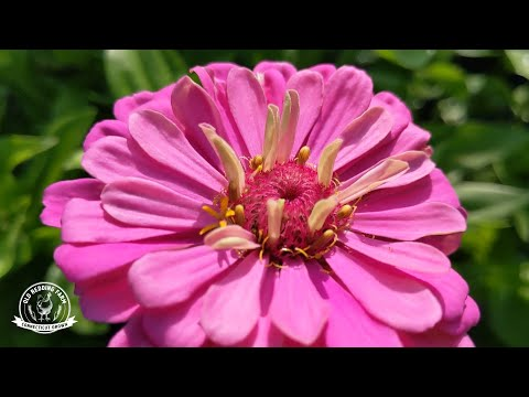 Tips for Growing Cut Flowers | Flower Farming for Market