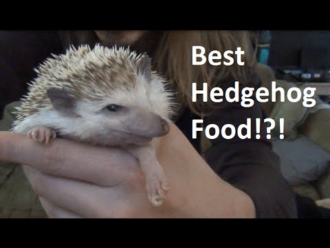 Cat And Hedgehog Best Friends Forever Doovi
