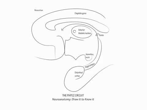 YouTube- The Papez Circuit - Draw it to Know it - Neuroanatomy Tutorial.mp4