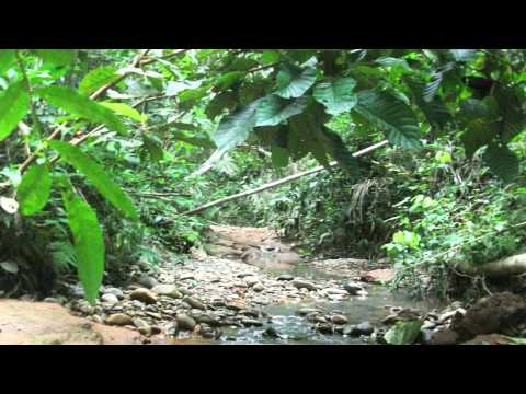 Amazon Rainforest Sounds (No Music - 9 Min) The Jungle at Night
