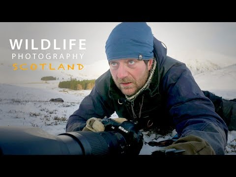 PHOTOGRAPHING MOUNTAIN HARES part 2 | Wildlife photography in Scotland - behind the scene VLOG