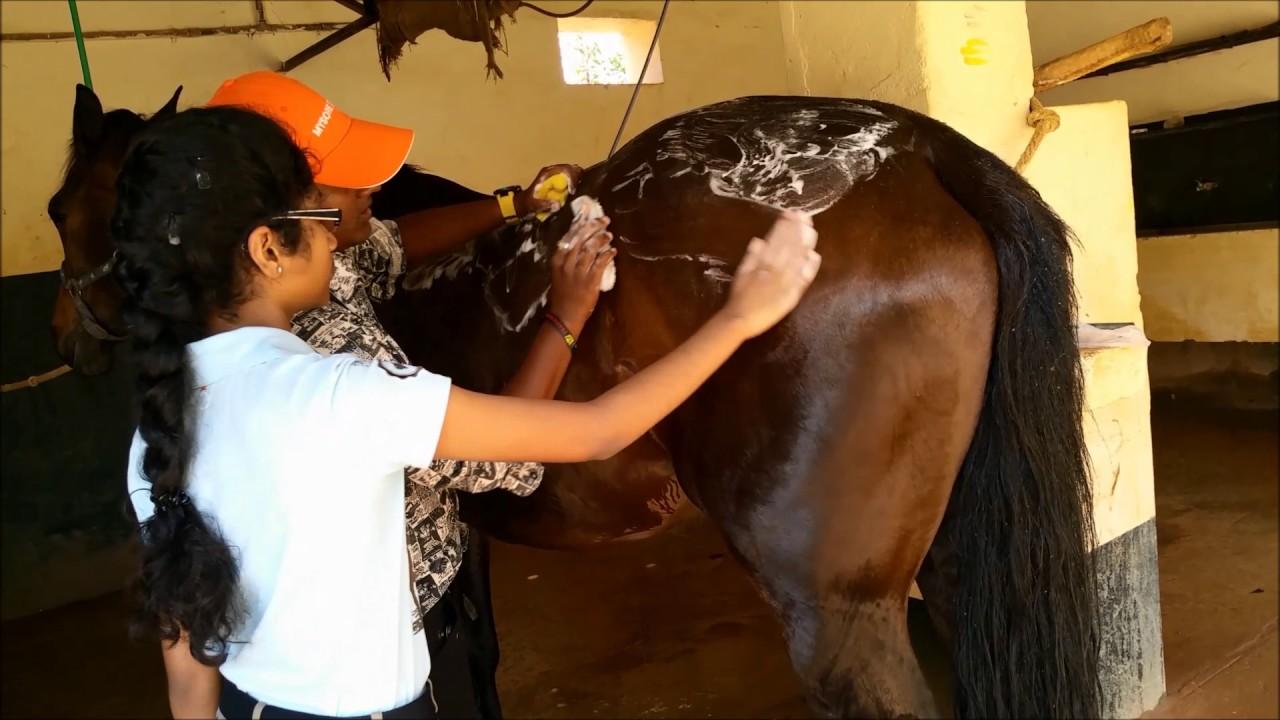 Kavya Gopal - Bathing my Horse - YouTube