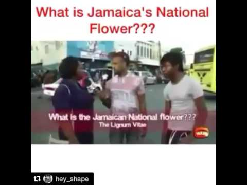 What is Jamaica
