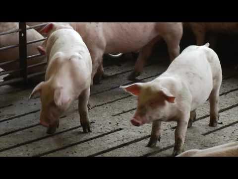 Martin Family Farms   Farm Tour