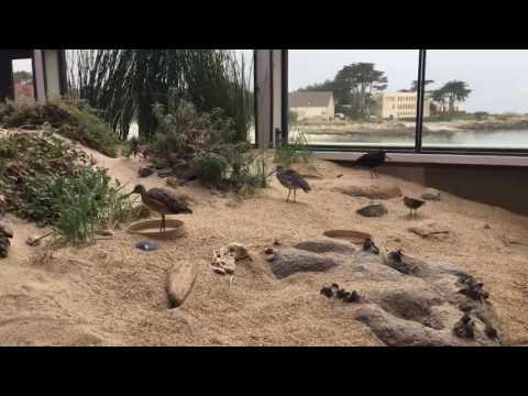 Jewel of morrows bay California(finding dory aquarium)