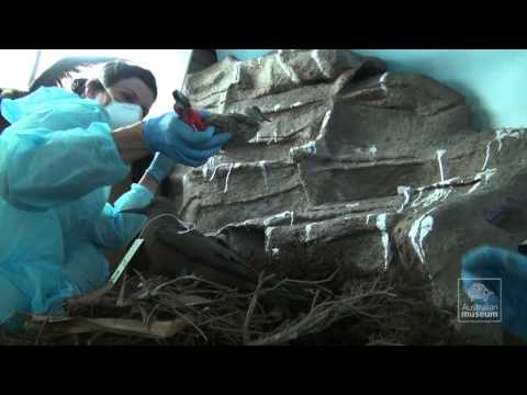 Lord Howe Island Diorama Conservation Project: Stage Two