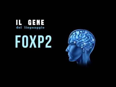 GLI ANUNNAKI  &  IL GENE FOXP2