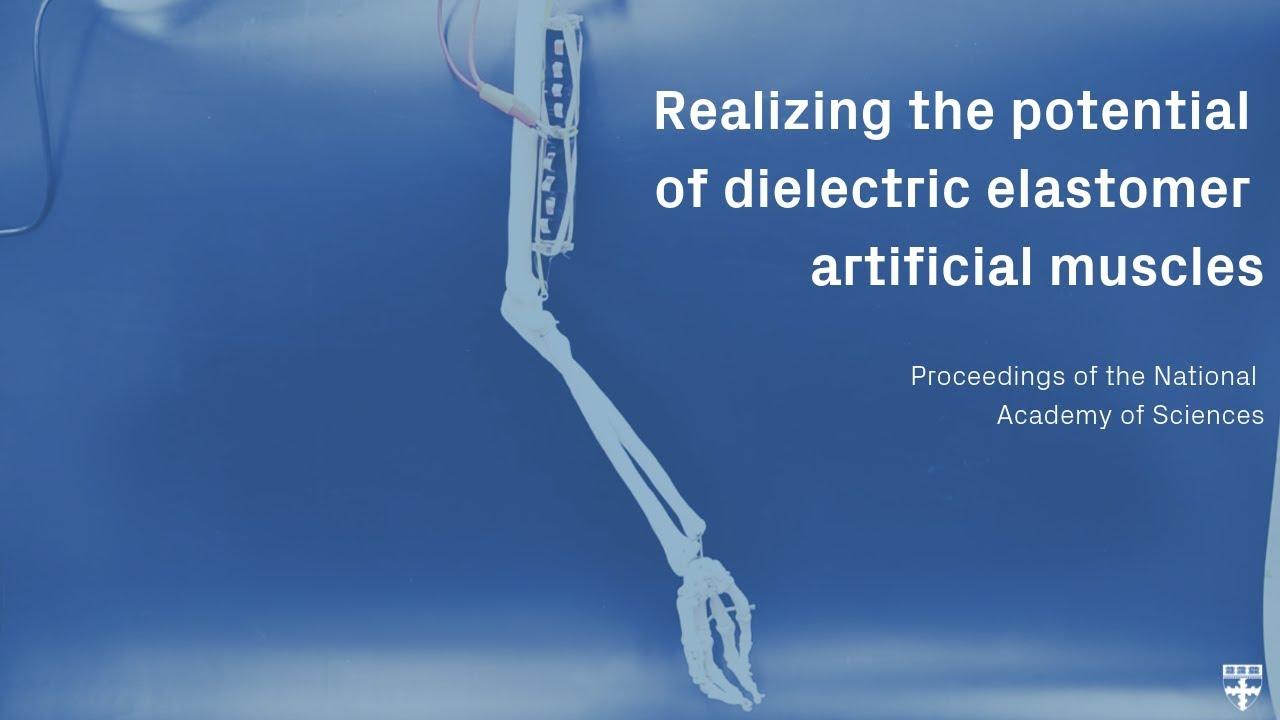 Artificial muscles for soft robots | Harvard John A  Paulson