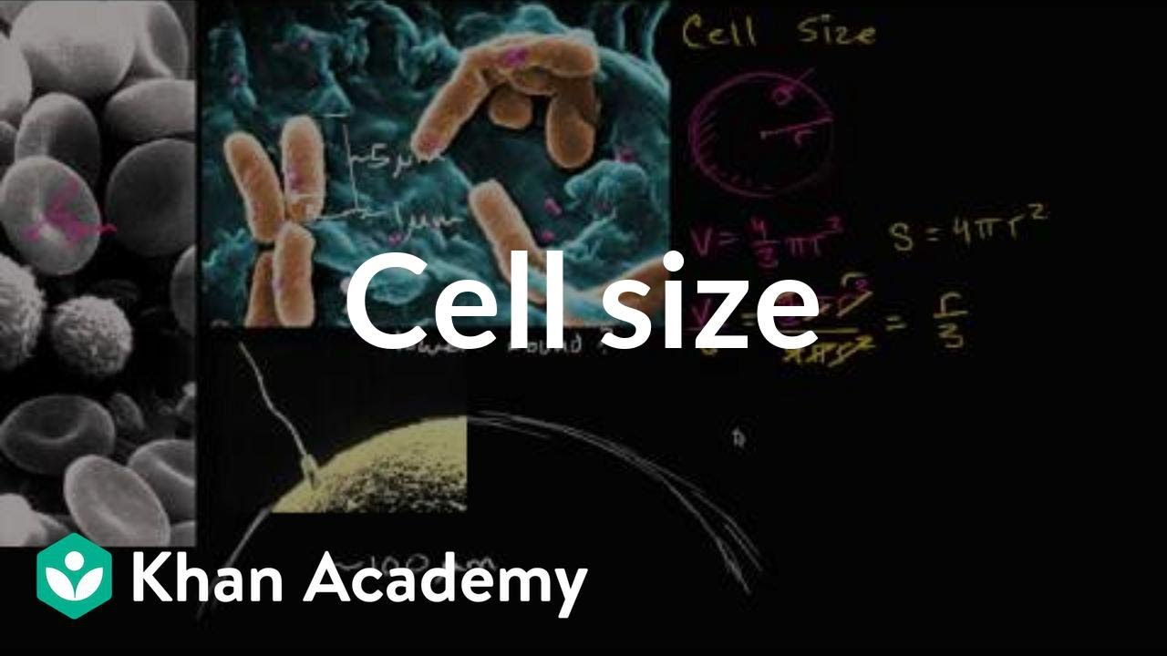 Cell size structure of a cell biology khan academy youtube ccuart Image collections