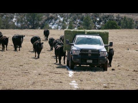 Martin Ranch   On The Job   Ram Heavy Duty Truck