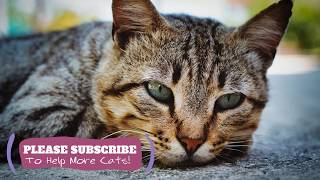 Calming Cat Music  2 Hours Soothing Tunes for Your Kitty ☯LCZ135