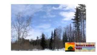 Алтай зимой  Что смотреть на алтае зимой