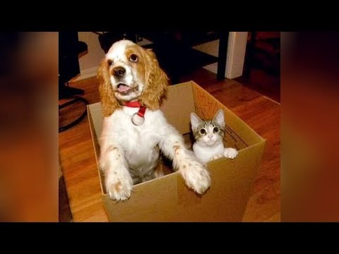 YOU will be OBSESSED with DOGS after watching this - Funny DOG compilation