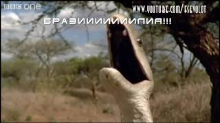 На языке животных #2