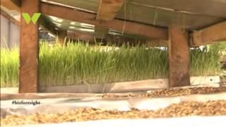 Business foresight: Hydroponics Farming