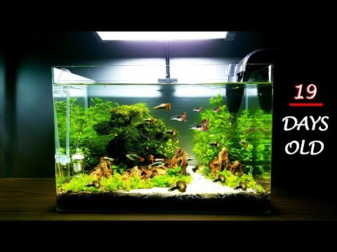 NEW IDEA - Set up SIMPLE and BEAUTIFUL Aquarium
