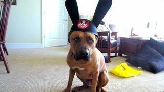 DISNEY DOG - Life After College Vlog: Ep. 173