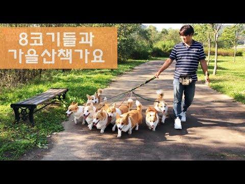 8마리의-강아지가-산책하는-모습은요-😘
