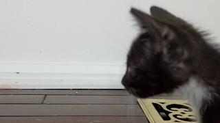 New Kitten Close Up