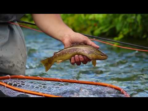 #HOPPERS - Fly Fishing The Driftless MN