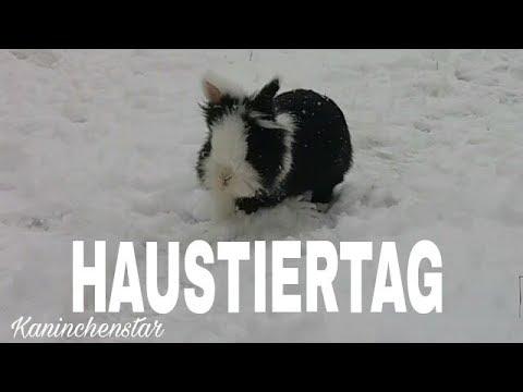 Haustiertag ♥🌸   Kaninchenstar
