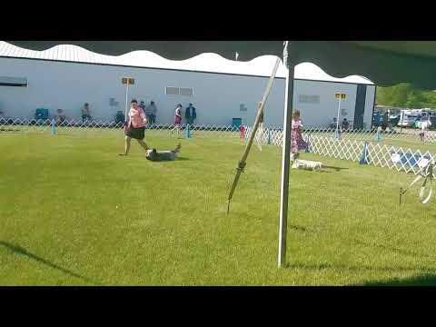 5.26.18 Key City KC - Skye Terrier Best of Breed