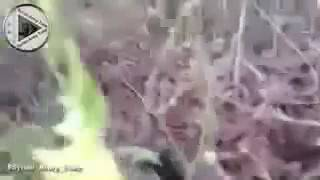 Сирия бои Гибель боевика перед камерой новости из Сирии сегодня