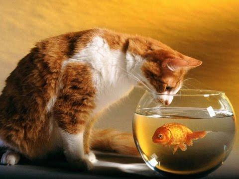 0 - Як доглядати за золотою рибкою?