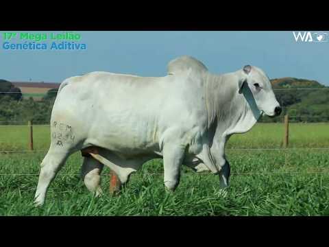 LOTE 08 - REM 10234 - 17º Mega Leilão Genética Aditiva 2020