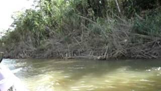 Pesca en el Rio Ichilo 2010