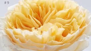Flower Trends Forecast Top 10 Floral Trends 2019