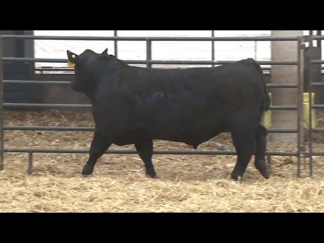 Schiefelbein Farms Lot 239