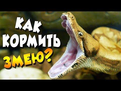 Чем питаются змеи в домашних условиях