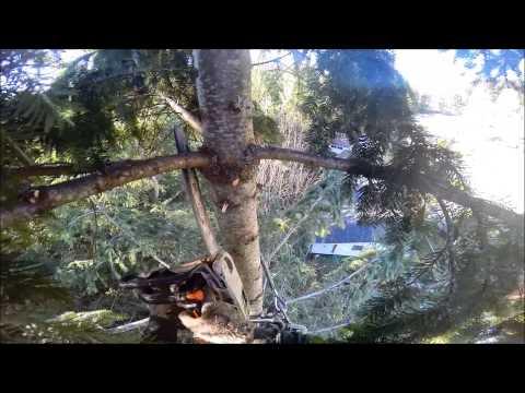 FIR TREE PRUNNING