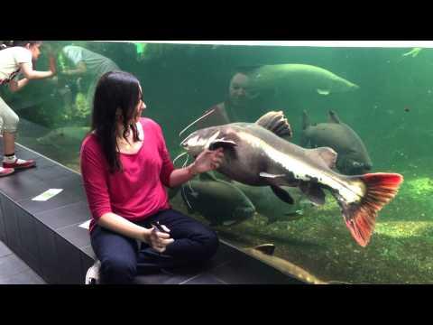 Monnara -  Zoo Aquarium Berlin