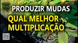 QUAL O MELHOR RAMO PARA REPRODUÇÃO DE MUDAS, AULA 11, Plantar em Casa